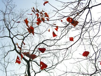 紛散的烏桕紅葉